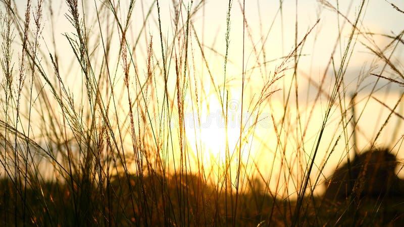 Lever de soleil et herbe en nature image stock