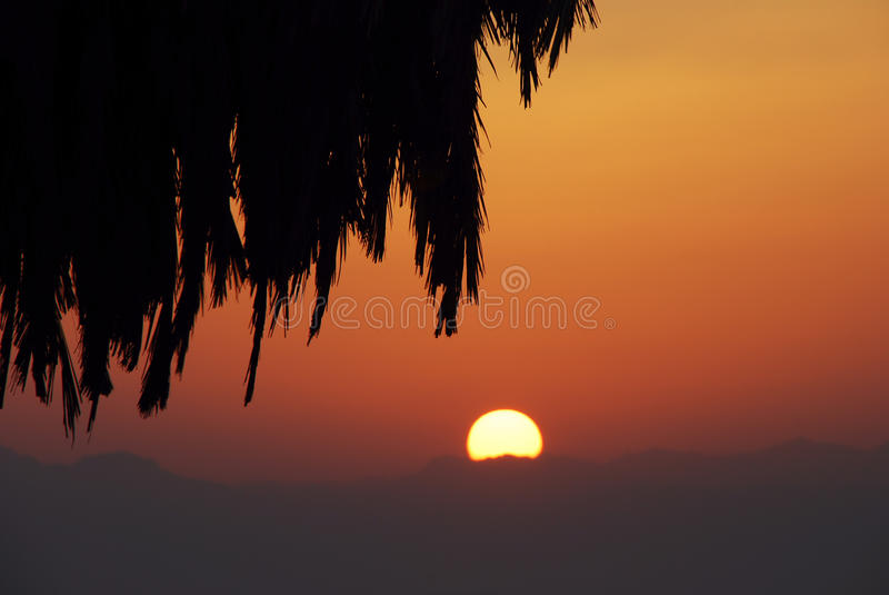 Lever de soleil et paume photographie stock