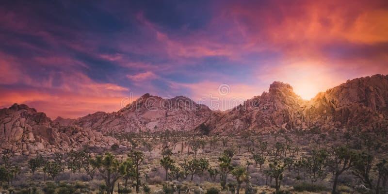 Lever de soleil magnifique au-dessus d'une forêt et des rochers de cactus en Joshua Tree National Park image stock