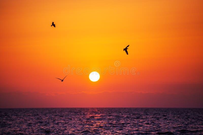 Lever de soleil de mer Oiseaux de vol et vagues brillantes dans l'océan photos stock
