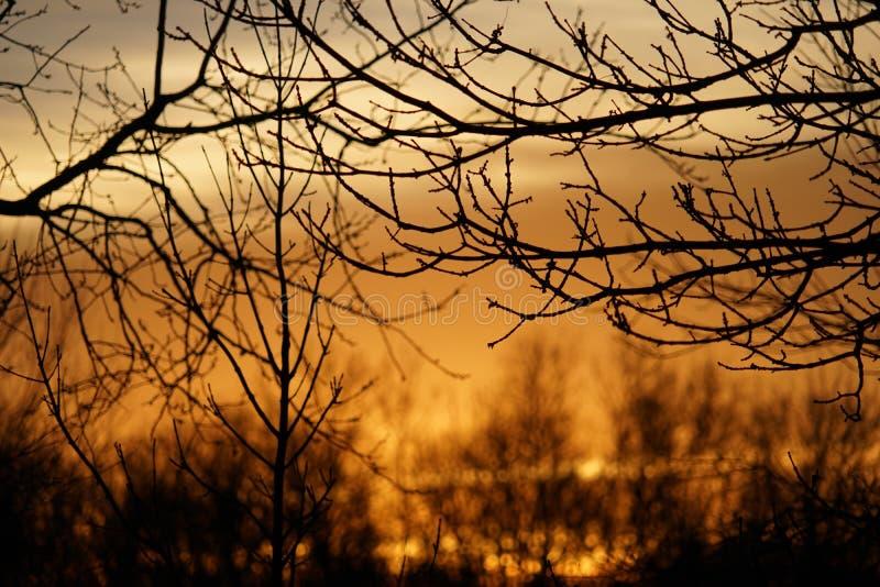 Lever de soleil montré entre les arbres photo stock