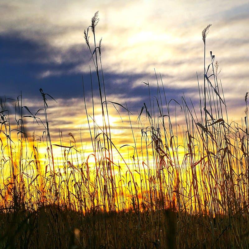 Lever de soleil de natures images stock