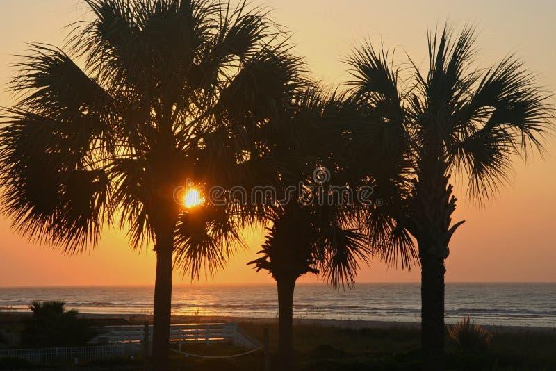 Lever de soleil par des palmiers image libre de droits