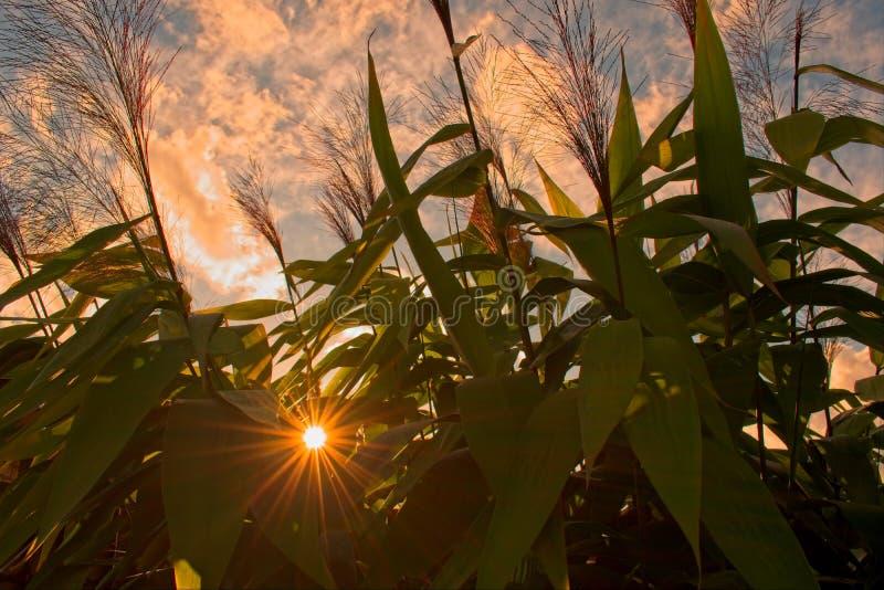 Lever de soleil par des plantes tropicales images libres de droits
