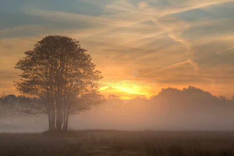 Lever de soleil par le brouillard image libre de droits
