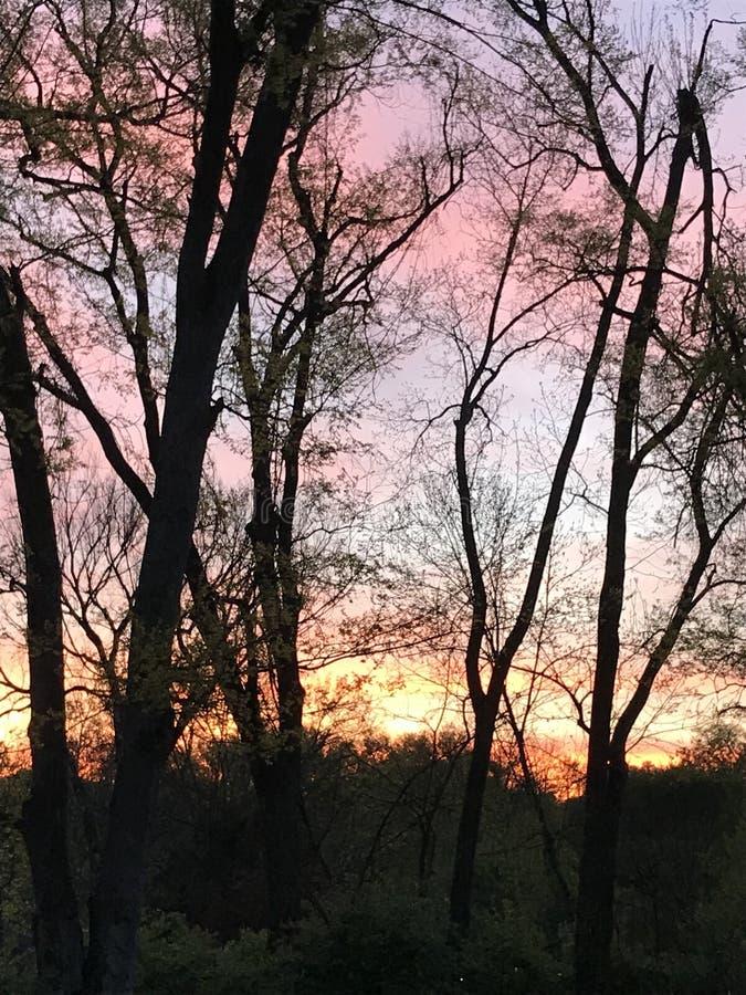 Lever de soleil par les arbres images libres de droits
