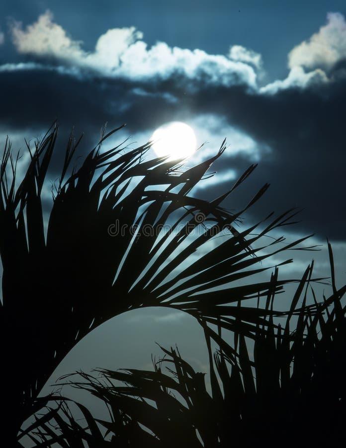 Lever de soleil par les paumes XII photographie stock