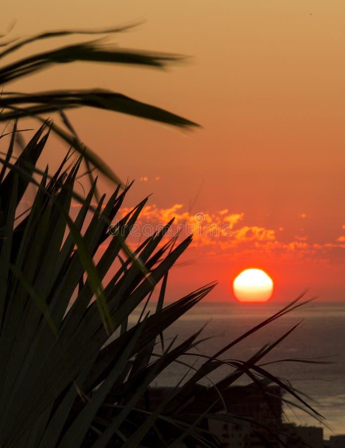 Lever de soleil par les paumes XVII photo libre de droits