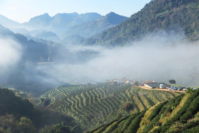 Lever de soleil pendant le matin avec le brouillard blanc au khang 2000 en terrasse vert d'ANG de Doi de plantation de thé Chiang photo stock
