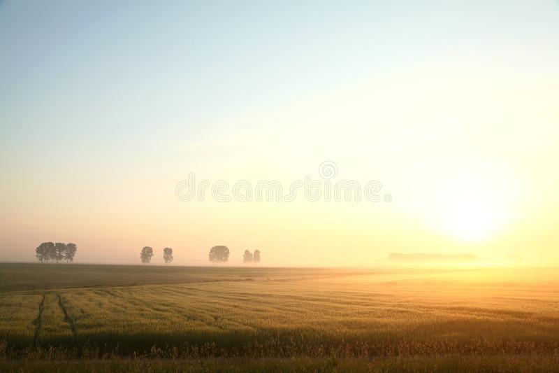 Lever de soleil de ressort au-dessus d'un champ de grain photographie stock