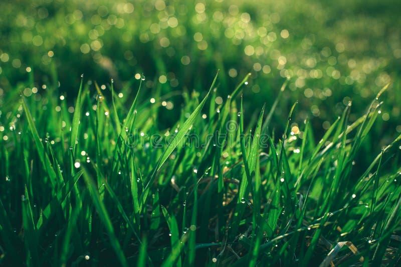 Lever de soleil de ressort et macro herbe image stock