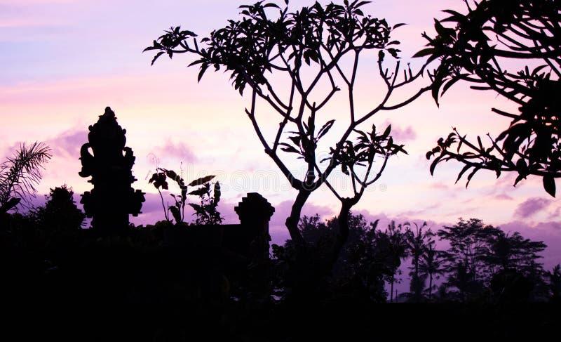 Lever de soleil rose dans Ubud Bali photo stock