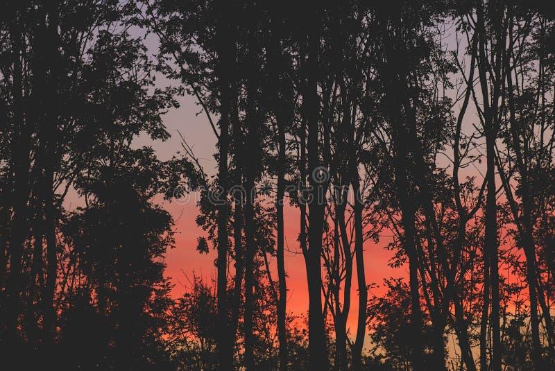 Lever de soleil rouge merveilleux entre le silouet des arbres photos stock