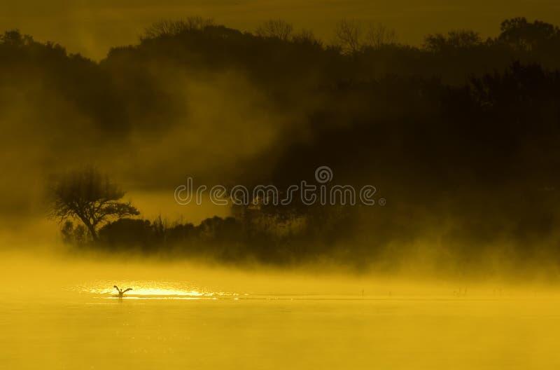 Lever de soleil sur l'étang photos stock