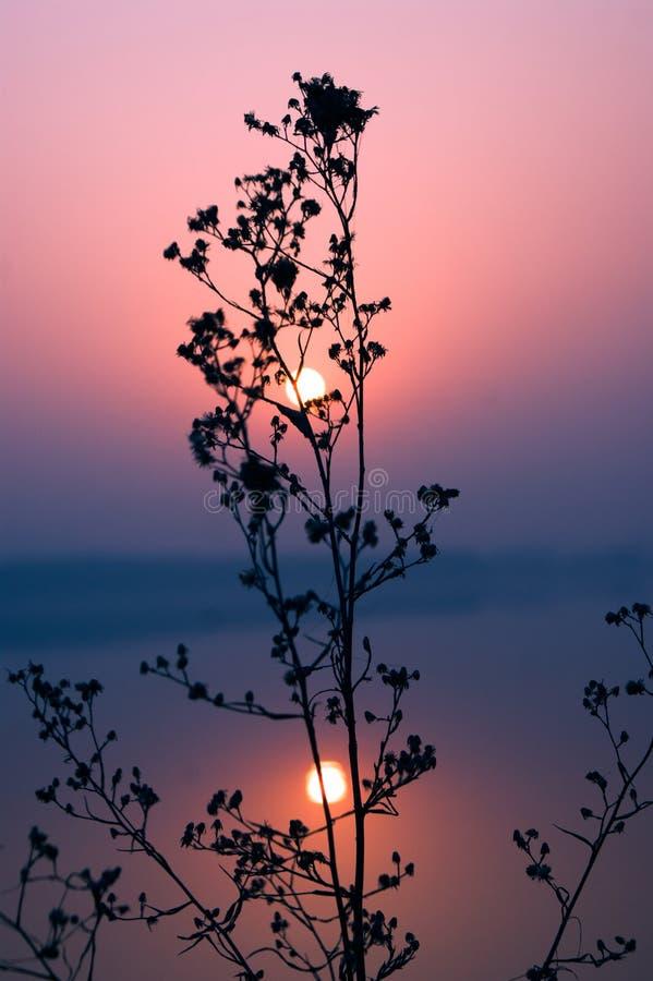 Lever de soleil sur l'eau stagnante paisible photo libre de droits