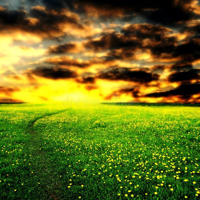 Lever de soleil sur le gisement de pissenlit photographie stock