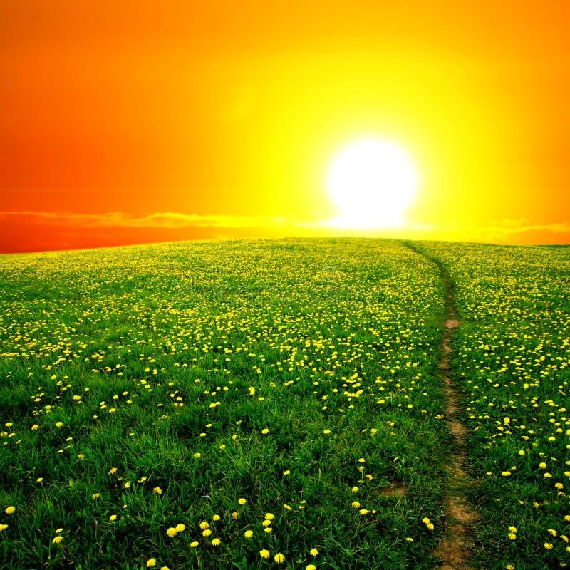 Lever de soleil sur le gisement de pissenlit image libre de droits