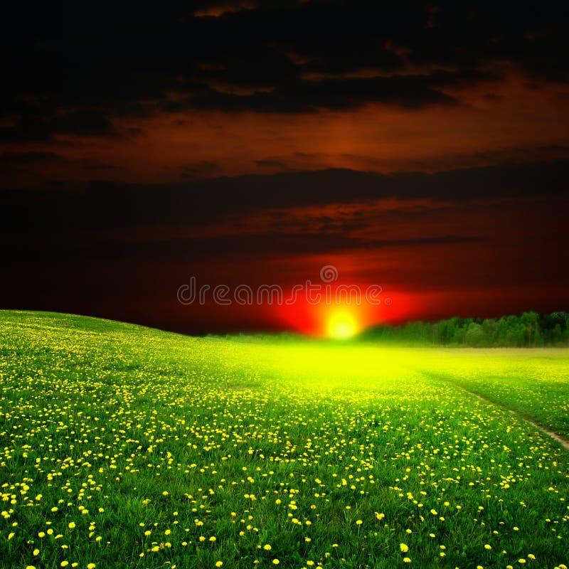 Lever de soleil sur le gisement de pissenlit image stock