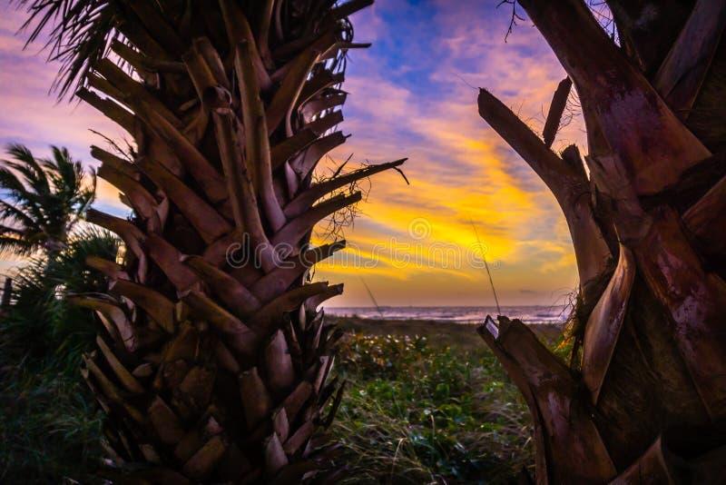 Lever de soleil sur une plage dans un paradis des Caraïbes avec des palmiers images stock