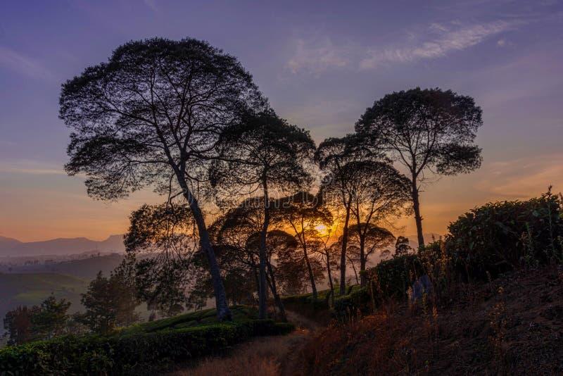 Lever de soleil sur une plantation image stock