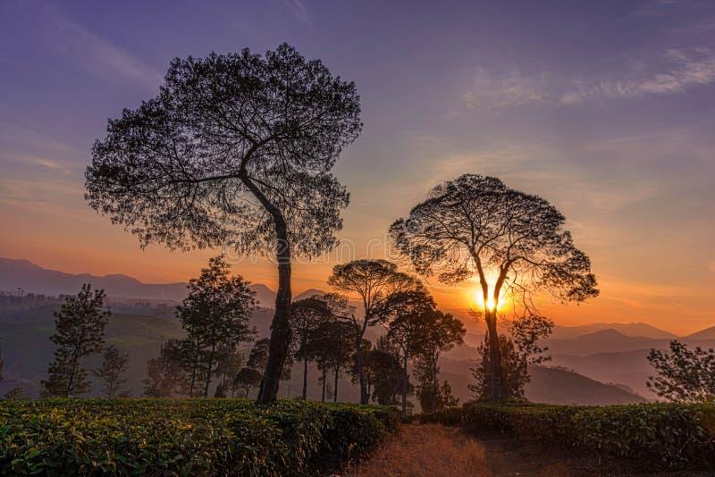 Lever de soleil sur une plantation II photographie stock libre de droits