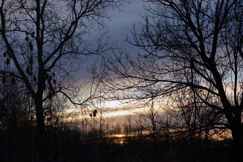 Lever de soleil tôt à l'arrière-plan de plusieurs arbres photos libres de droits