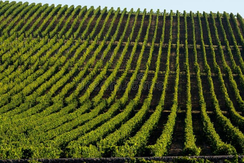 Lever de soleil-vignobles de vignoble de Saint Emilion photos libres de droits