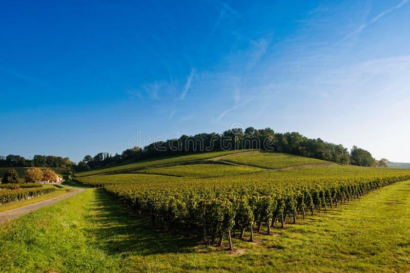 Lever de soleil-vignobles de vignoble de Saint Emilion images libres de droits