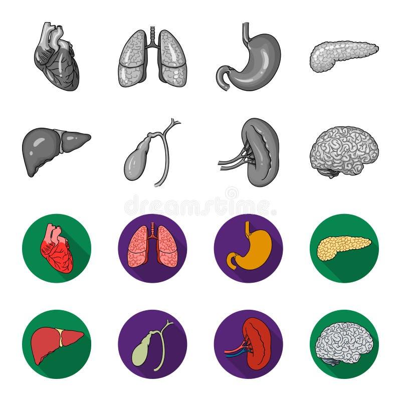 Lever, gallbladder, nier, hersenen Menselijke organen geplaatst inzamelingspictogrammen in de zwart-wit, vlakke voorraad van het  royalty-vrije illustratie