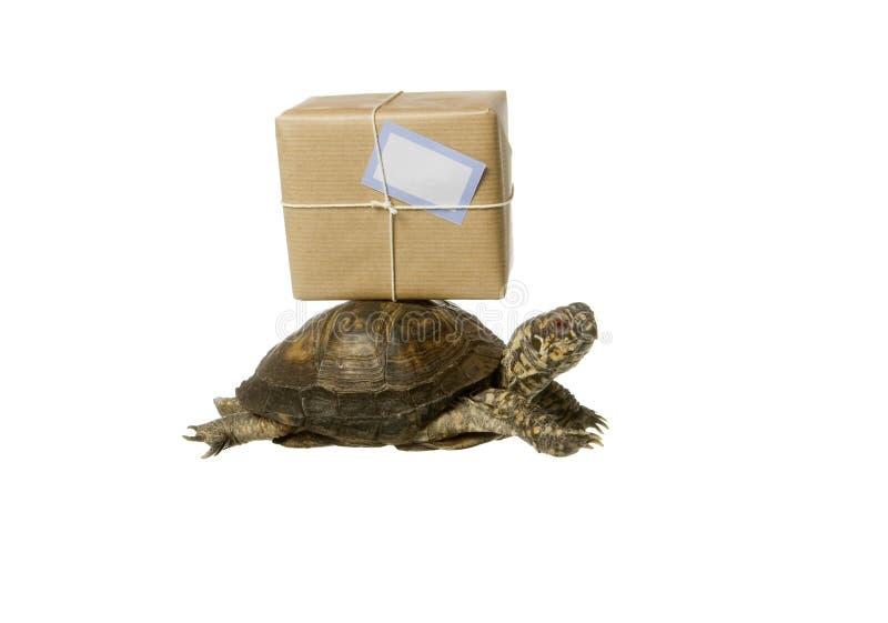 leveranssköldpadda royaltyfri foto