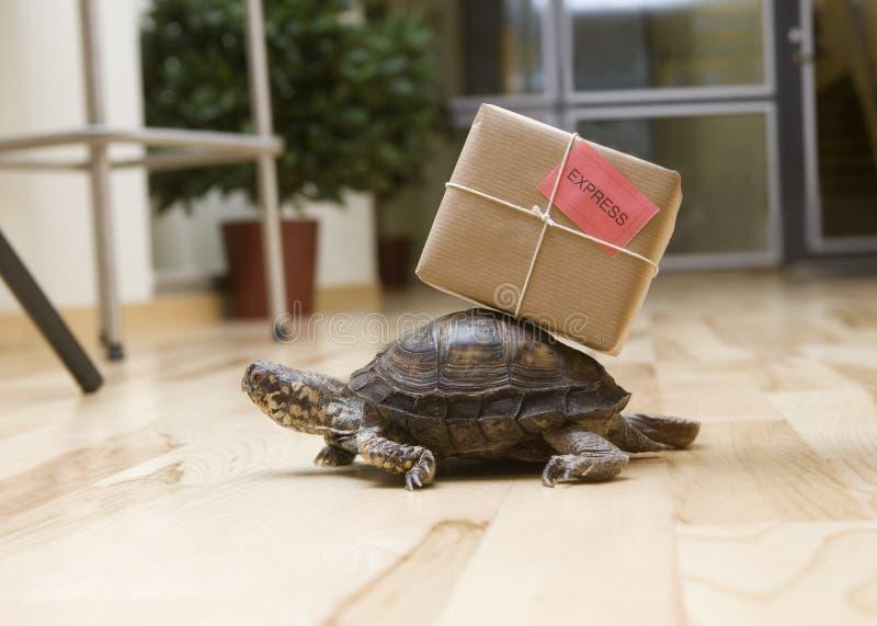 Leveranssköldpadda royaltyfria bilder