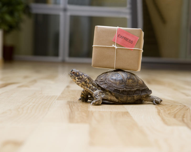 Leveranssköldpadda royaltyfri fotografi