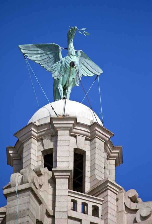 Leverfågel som sätta sig på den kungliga leverbyggnaden royaltyfri foto