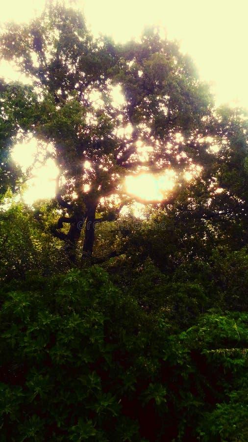 Levier de soleil photos libres de droits