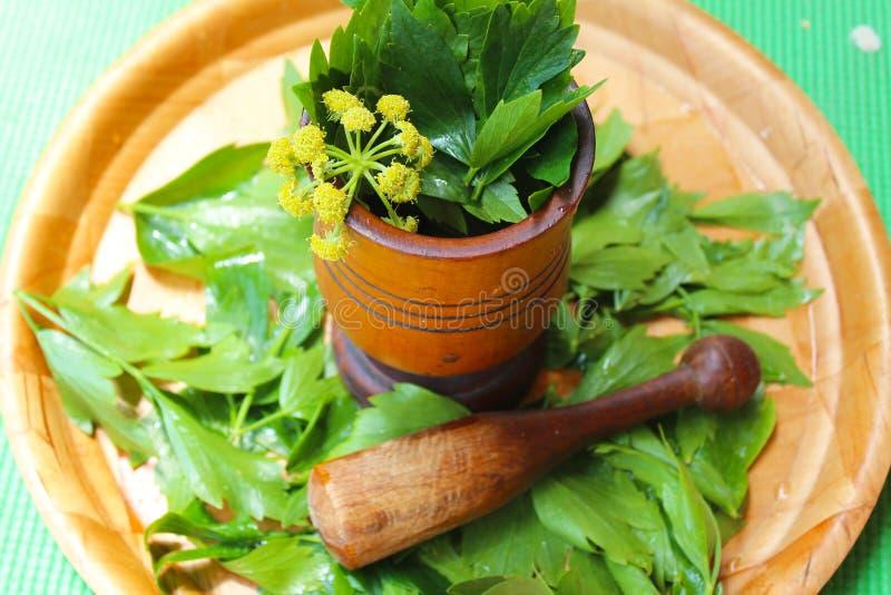 Levisticum officinale, powszechnie nazwana lubczykowa roślina, ziele, pikantność, liście i kolorów żółtych kwiaty, ziarna, przygo zdjęcie royalty free