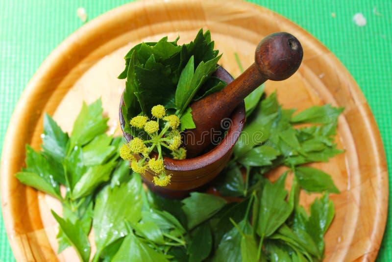 Levisticum officinale, powszechnie nazwana lubczykowa roślina, ziele, pikantność, liście i kolorów żółtych kwiaty, ziarna, przygo zdjęcia stock