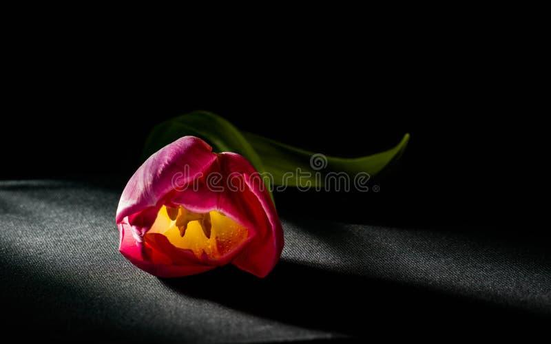 Levitatie ondergaand purpere tulpen tegen oud concreet water als achtergrond bespat verse beweging stock afbeelding