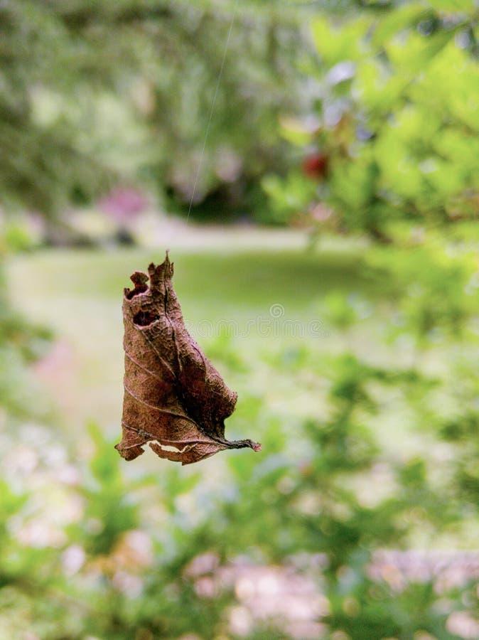 Levitating коричневая иллюзия лист в саде стоковые фотографии rf