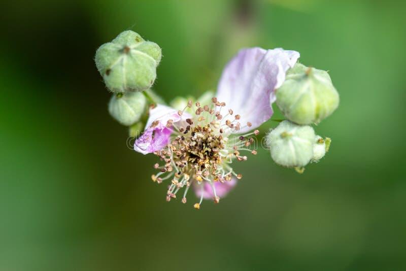 Levitating kwiat makro- fotografia zdjęcie stock