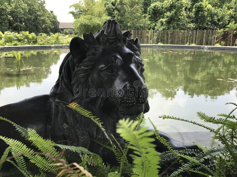 lew ciemniuteńki fotografia stock