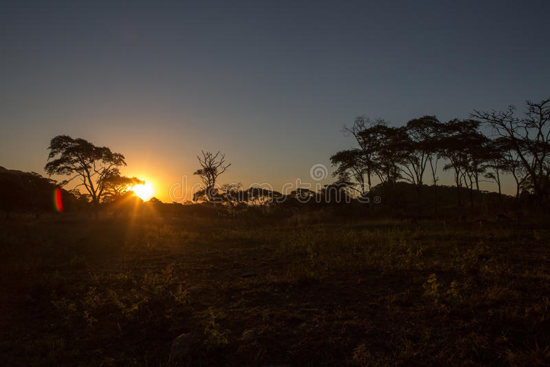 Lew i Chitaah park w Harare, Zimbabwe obraz royalty free