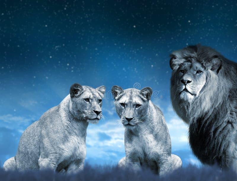 Lew i lwica na sawannie zdjęcie stock