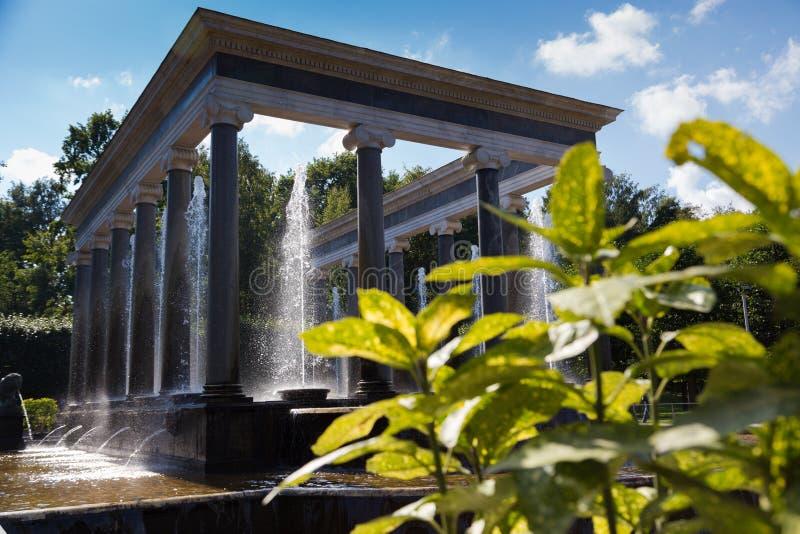 Lew kaskada, fontanna w Peterhof obraz royalty free