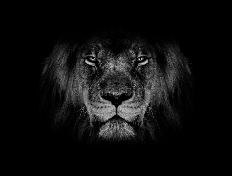 Lew twarzy czarny i biały tapeta fotografia stock
