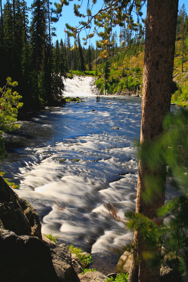 The Lewis Falls in the Yellowstone stock photos