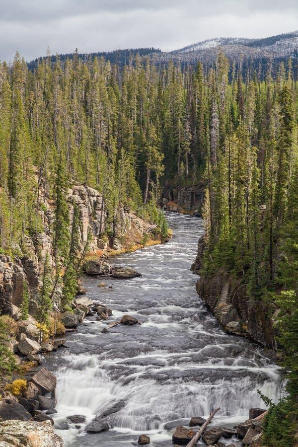 Lewis River Canyon Yellowstone N P royaltyfri foto