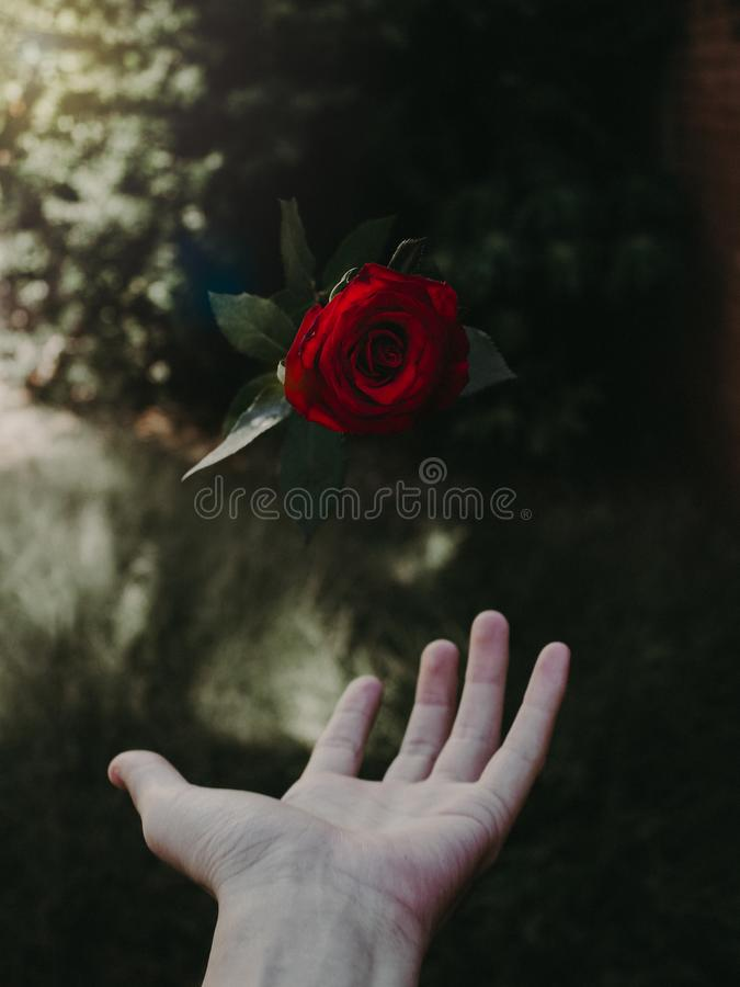 Lewitacja kwiat zdjęcie stock