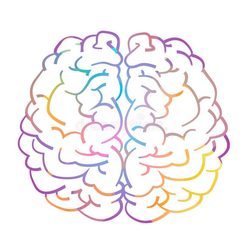 Lewy i prawy hemisfera ludzki mózg ilustracji