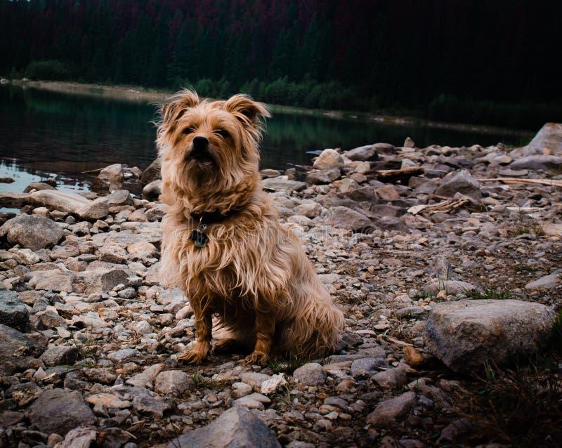 Lexy nach einem Bad des frühen Morgens im See schaut neugierig als ob, um zu sagen, was jetzt lizenzfreie stockbilder