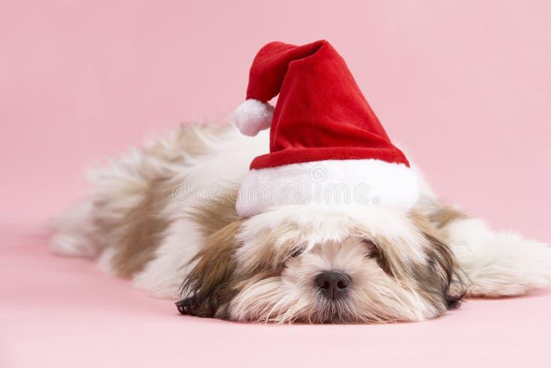 Lhasa Apso Dog Wearing Santa Hat stock photography